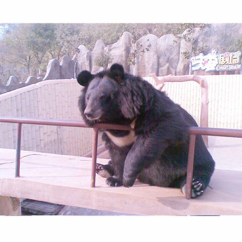 青岛东方熊牧场儿童/老人票电子票通票