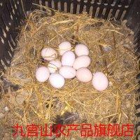 九宫山鹊山鸡蛋