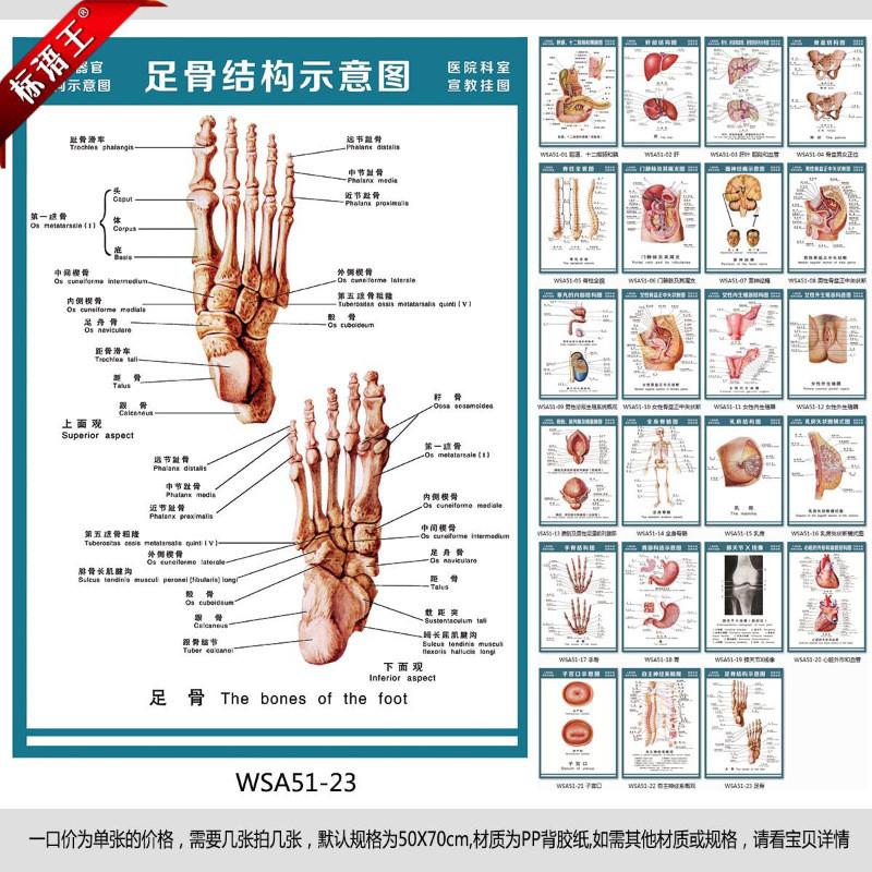 医院科室挂图人体构造解剖图,足骨结构示意图宣传画贴画wsa51