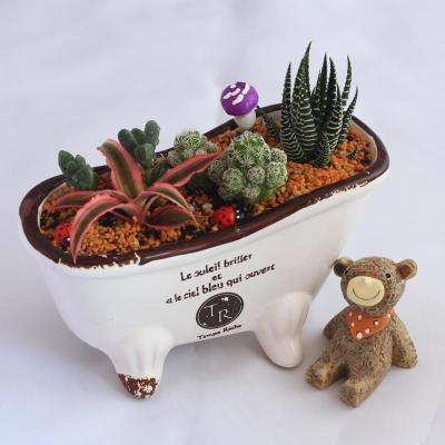 多肉植物组合 创意盆栽