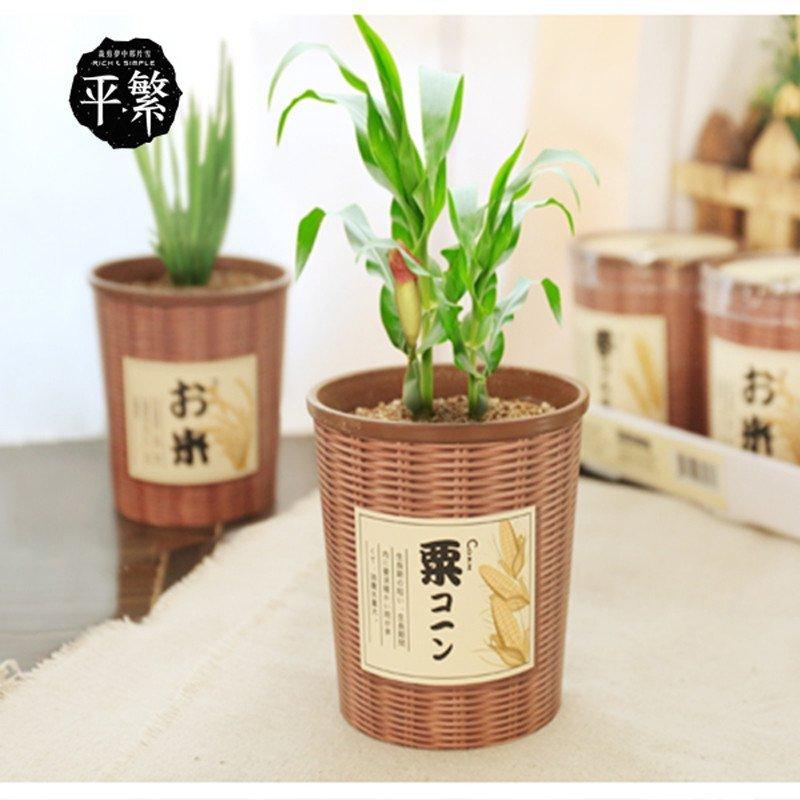 平繁 五谷栽培盆景 日式和风植物盆栽 可爱迷你桌面绿植 节日礼物情侣