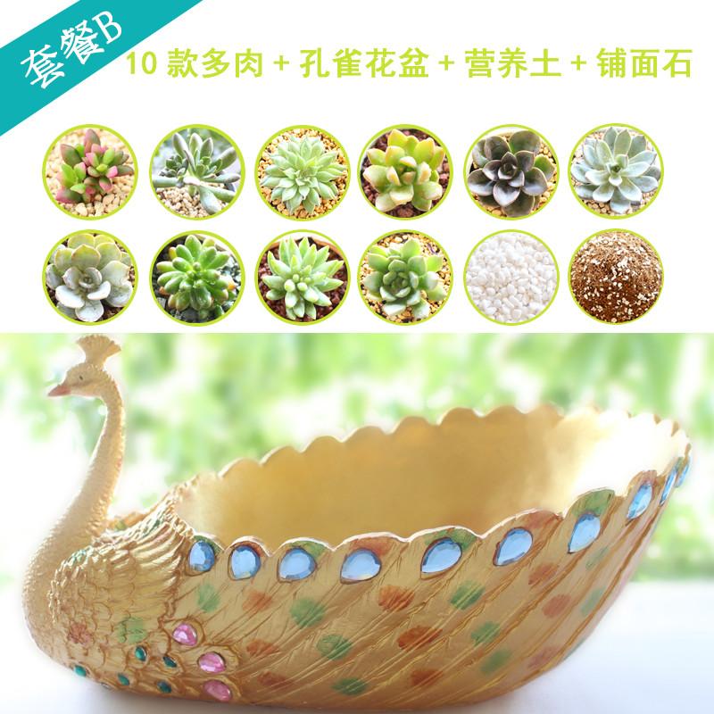 特价大号树脂孔雀多肉花盆创意拼盘肉肉植物个性组合盆栽塑料