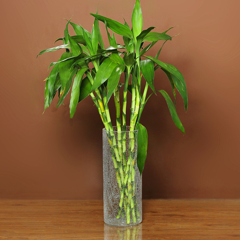 富贵竹花瓶玻璃透明家用水竹转运竹子直筒碎冰花冰裂大口径特大号