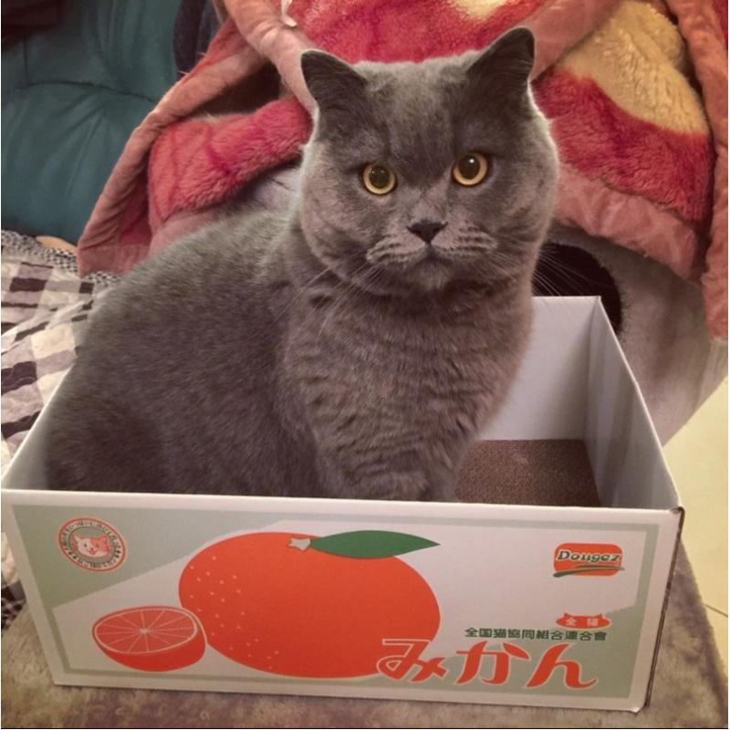 猫抓板猫沙发猫咪房子猫抓玩具磨爪纸箱底层抓板 猫纸盒