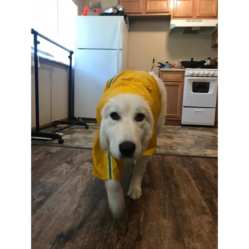 狗狗雨衣秋冬衣服四脚大狗宠物中大型犬金毛泰迪萨摩防水雨披图片